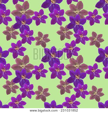 Clematis. Texture Of Flowers. Seamless Pattern For Continuous Replicate. Floral Background, Photo Co