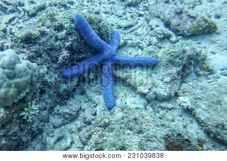 The Sea Star On The Bottom Of The Sea, Against The Background Of Dead And Living Corals