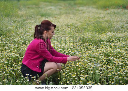 The Young Girl Is Picking Daisies While Taking Photos Outdoors In The Field Of Chamomile.