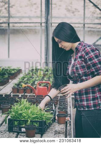 Farmer Girl Tranplanting Herb