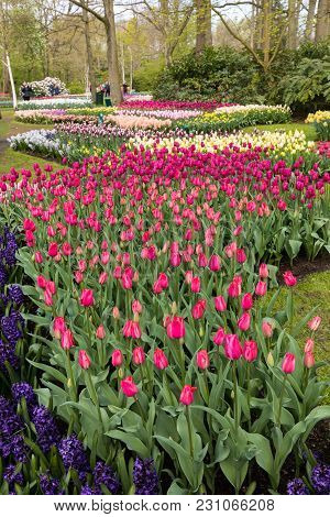 Lisse Netherlands - April 19, 2017: Visitors At The Keukenhof Garden In Lisse, Holland, Netherlands.