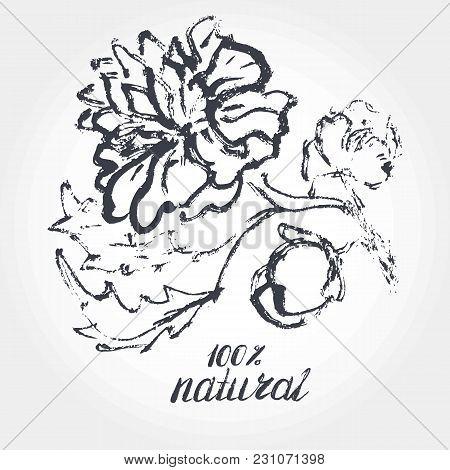 Hand Drawen Peony Doodle. Letterihg Natural. Brush Pen Inc.