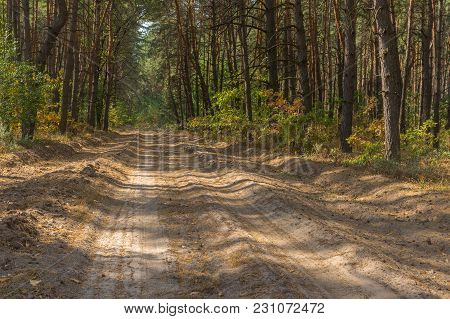 Summer Landscape With An Empty Sandy Road In Pine Forest