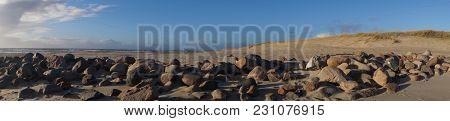 Blavand - Stones And Shellfish Conch At The Beach Of Blavand / Ho Denmark