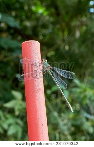 Green Dragonfly Sitting On Red Metal Rod On Sunlight.