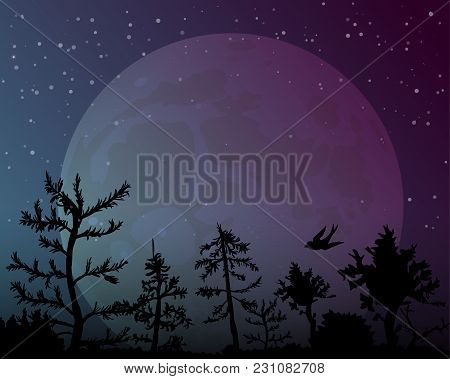 Big Moon On Night Sky Background. The Nightly Forest With The Bird. The Stars Shine Brightly. Vector