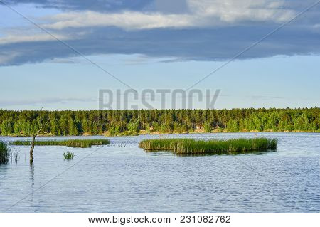 Spring Landscape A Large Lake With Areas Of Rising Young Cane