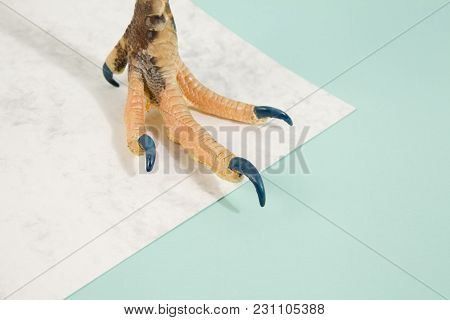 Fashion Chicken