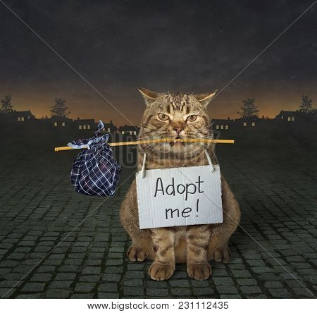 The Loneliness Cat With A Sign Around His Neck Is On A Paved Road. It Says