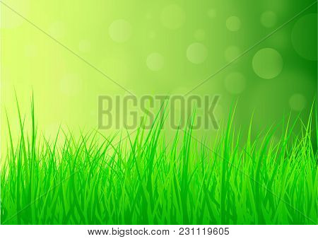 Lush Green Natural Summer Or Spring Background With Grass And Glistening Light