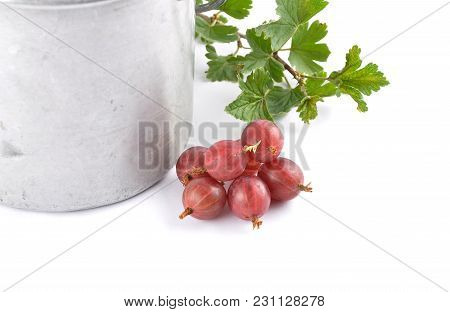 Colorful And Crisp Image Of Gooseberry With Twig And Tin Bucket