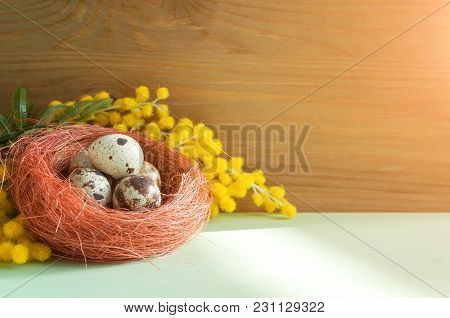 Easter Background. Easter Eggs In The Nest Near The Mimosa Flowers, Free Space For Festive Easter Te