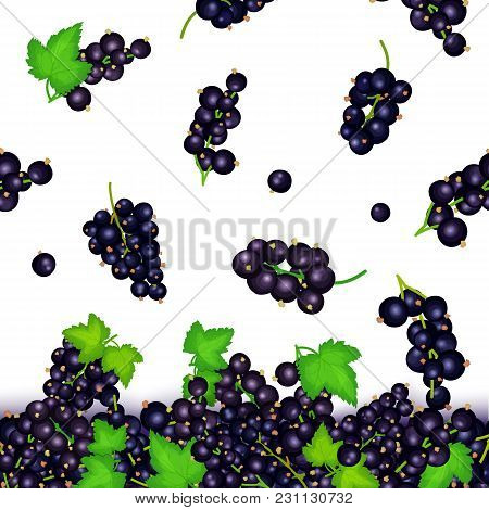 Vector Illustration Of Falling Black Currant Berries. Vector Card Illustration. Black Currant Fruit