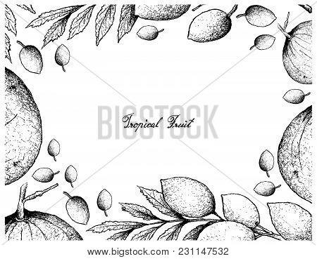 Tropical Fruits, Illustration Frame Of Hand Drawn Sketch Sandoricum Koetjape, Santol Or Krathon And
