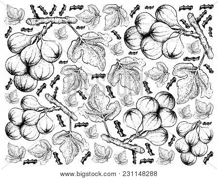 Fresh Fruit, Illustration Of Hand Drawn Sketch Delicious Fresh Cluster Fig Tree Or Ficus Racemosa Is