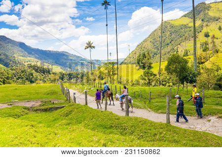 Salento March 2018 This Is Cocora Valley, In Salento Colombia. Whit The The Biggest Palms In The Wor