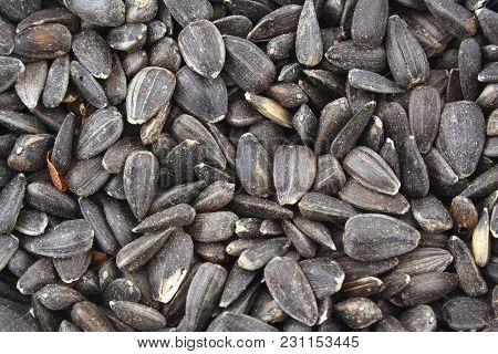 Close Up Black Sunflower Seed Background Image