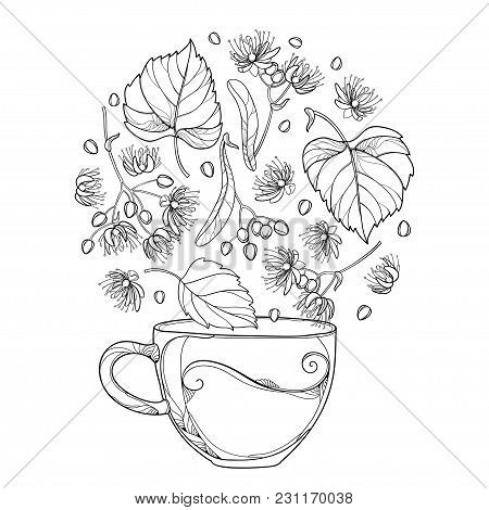 Vector Outline Cup Of Linden Or Tilia Or Basswood Herbal Tea In Black Isolated On White Background.