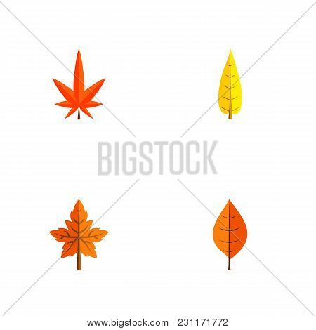 Icon Flat Maple Set Of Alder, Hickory, Aspen And Other Vector Objects. Also Includes Leaf, Alder, As