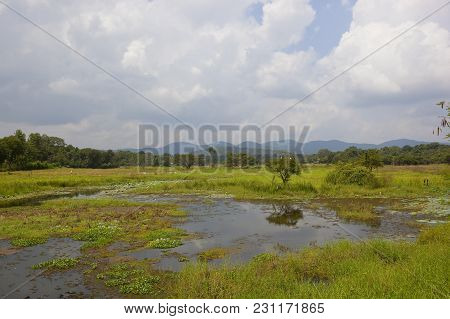 Lake And Woodland With Mountains In The Beautiful Wasgamuwa National Park With Water Hyacinth And Lo