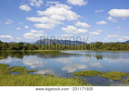 Beautiful Lake With Reflections Lotus And Water Hyacinth Near Mountains And Woodland In Wasgamuwa Na