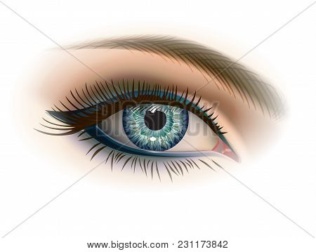 Gray Female Eye With Makeup. Realistic Vector Image