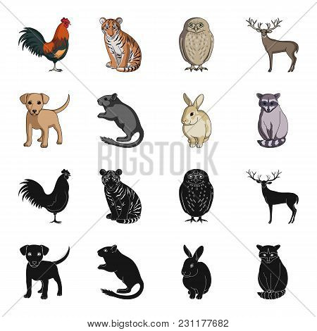Puppy, Rodent, Rabbit And Other Animal Species.animals Set Collection Icons In Black, Cartoon Style