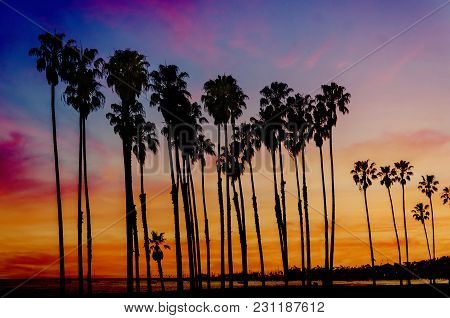 Tropical Beach Sunset With Hight Palm Trees Sihouette Near The Ocean In California