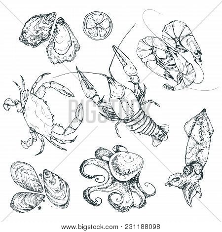 Seafood Sketches Isolated On White Background. Hand Drawn Sea Food Collection. Vector Illustration F