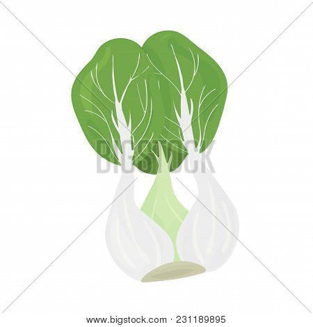 Vector Isolated Illustration: Bok Choy Or Pak Choi, Also Called Chinese Chard, Celery Mustard, Brass
