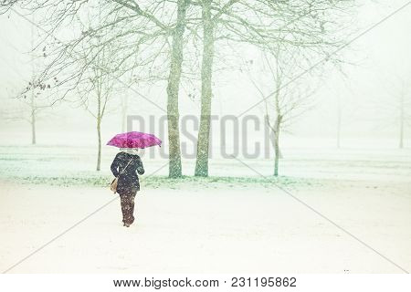 Woman Walking Through Snow With Umbrella, Parco Di Monza, Italy
