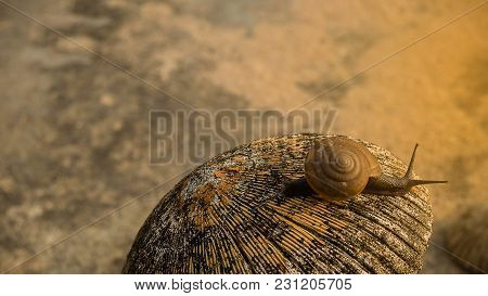 Snail Slime Has Medicinal Properties And Is Used In Terms Of Beauty, For Skin Care.