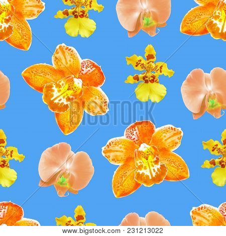 Orchid, Phalaenopsis. Texture Of Flowers. Seamless Pattern For Continuous Replicate. Floral Backgrou