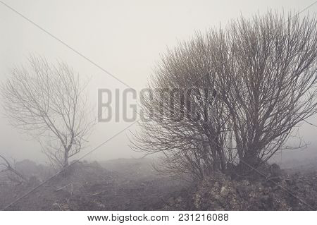 Landscape with fog over tree