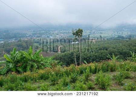 Flower Meadow On The Mountain With Haze On The Background And Countryside View, Traveling In Thailan
