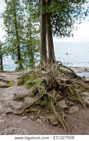 Two Trees And A Tree Stump With Exposed Roots Along Lake Michigan