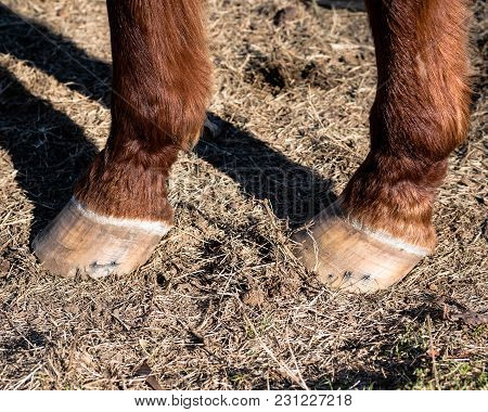 Two Horses's Hooves Close Up