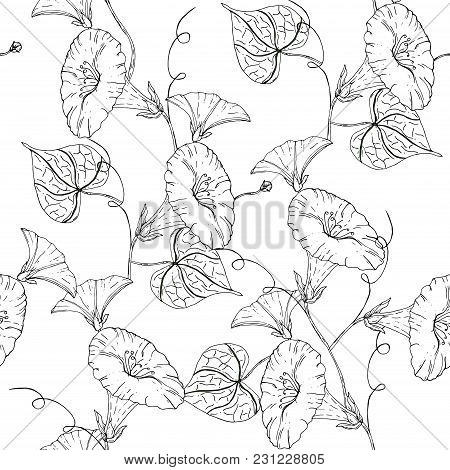 Vector Uncolored Pattern With Blue Bindweed On White Background. Vintage Flowers.