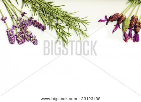 healing herbs (lavander and rosemary) on a white background isolated
