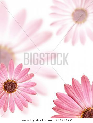 Background made of flowers of spring in bloom, isolated. Pattern.
