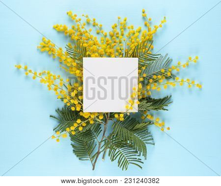 Greeting Card And Mimosa Flowers On Blue Background
