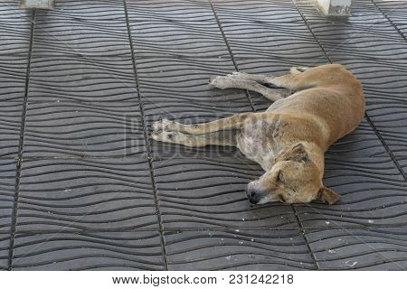 Sick Dog Need Helping Live On The Street., Homeless Stray Thai Dog Leper On The Countryside Way.