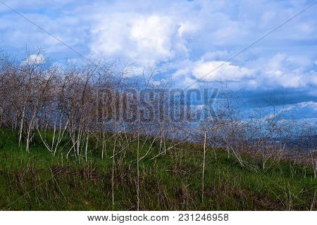 Lush Green Field On Rural Grasslands With Storm Clouds Beyond Taken On A Prairie