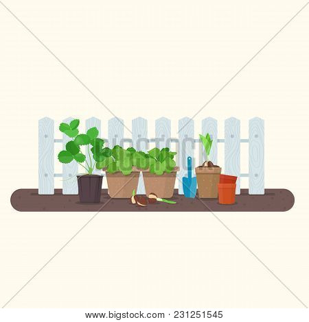 Young Plants In Plastic And Biodegradable Peat Pots Against Wood Fence. Vector Gardening Concept