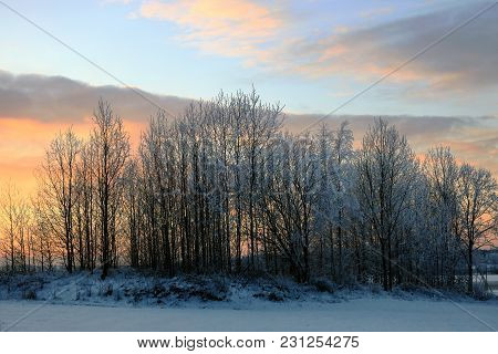 Sunset Sky Behind Frosted Trees In Winter.