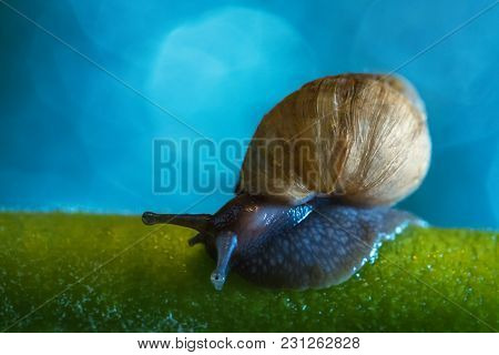 Snail Of Achatina Craveni Sits On A Green Stalk Against A Blue Fairy Sky
