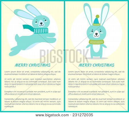 Merry Christmas Greeting Card Fluffy Rabbits With Long Ears, Small Tail In Warm Scarf Jumps Up And S