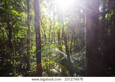 Sunny Jungle in Costa Rica