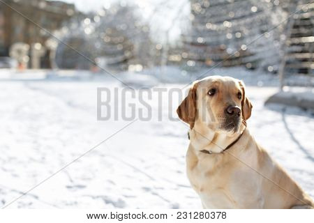 Cute lovely dog outdoors on winter day