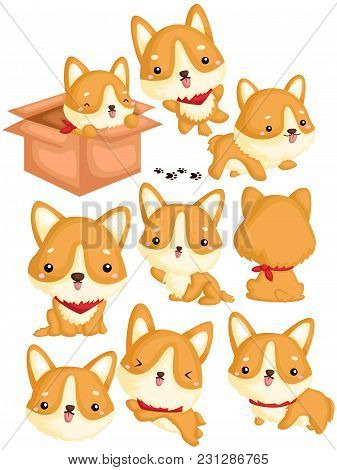 A Corgi Vector Set With Many Poses And Activity